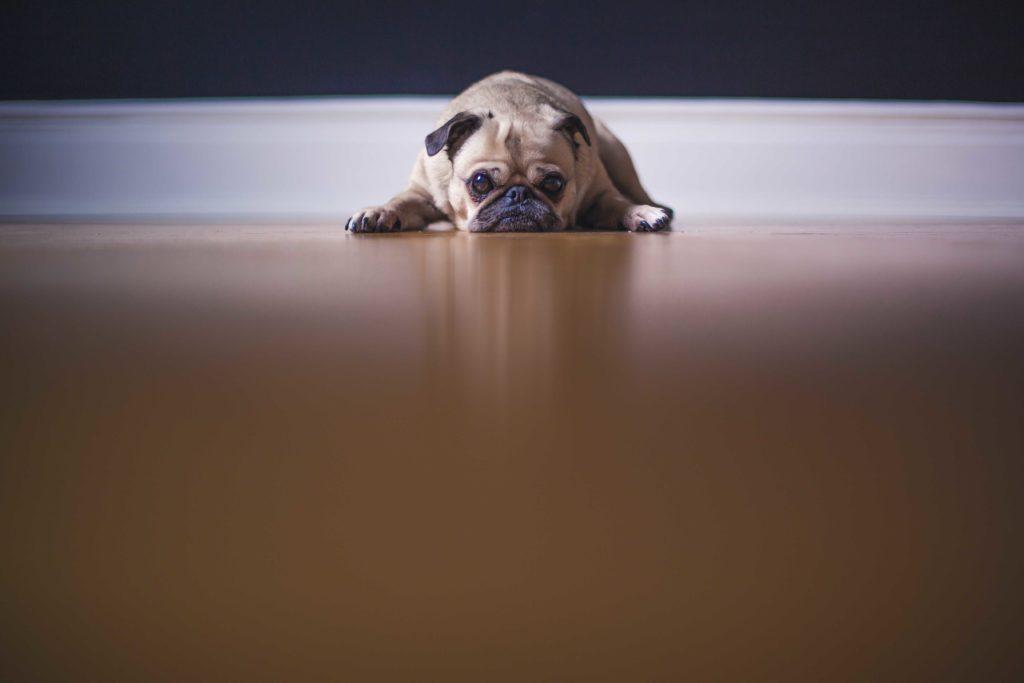 Colchones para perros ¿por qué mi mascota necesita uno?