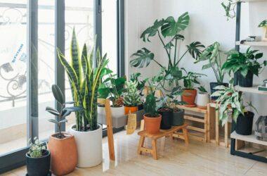 Mudanza con plantas de interior